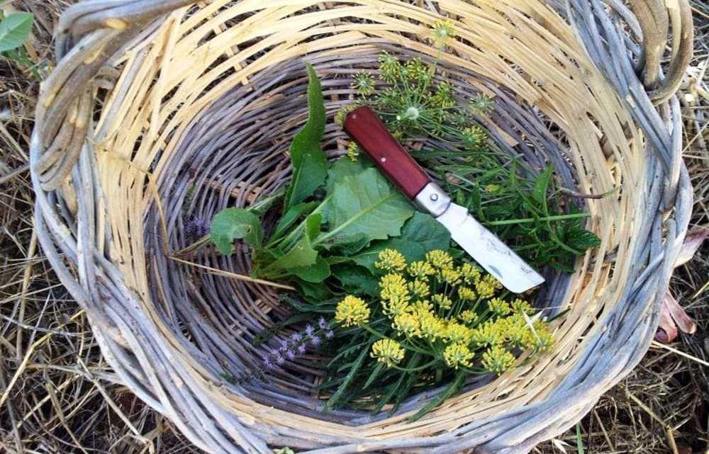 Foggia: al via un corso su Erbe Officinali, Aromatiche e Mangerecce
