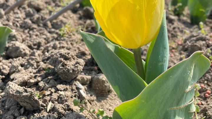 Giuseppe Savino: Agricoltura & Bellezza in terra di Capitanata