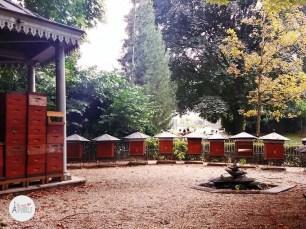 Jardin du Luxembourg : apiario