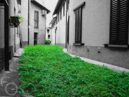 Photo: F. Giannotti