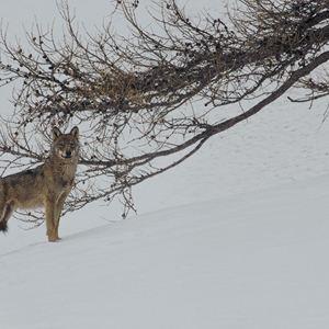 la-vallee-des-loups-4