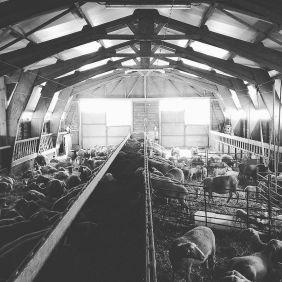 Non ce n'est pas le départ du festival des templiers... Juste une ferme auberge de L'Aveyron