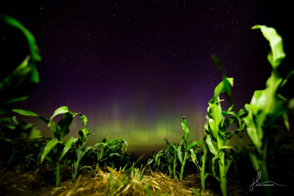 Northern Lights-0257