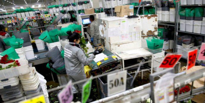Migrantes venezolanas trabajan más horas y devengan la mitad que las colombianas