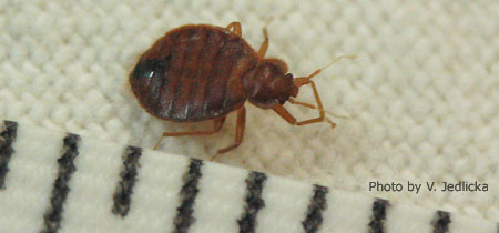 Managing Bed Bugs