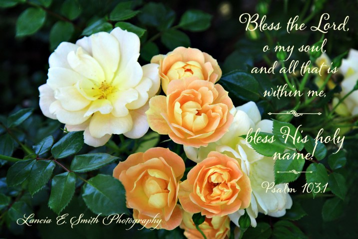 Bless the Lord - Creme Brulee Roses