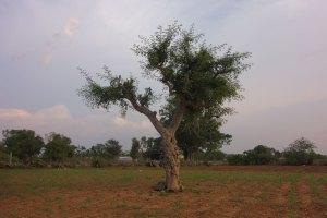 land-and-lens-india-chikkamahadeva-1