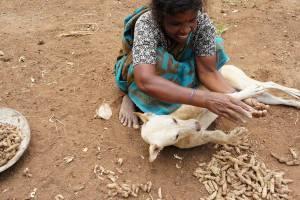 land-and-lens-india-mahadevamma-3