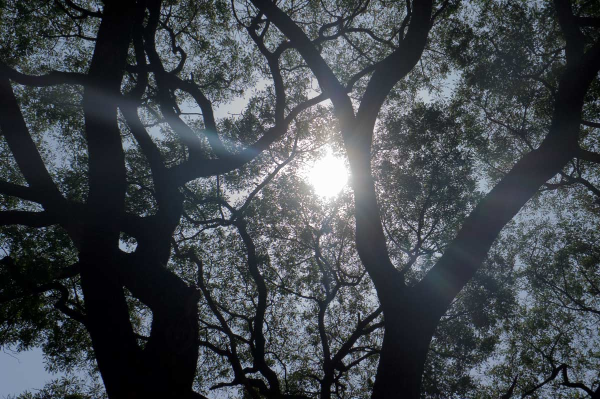 land-and-lens-india-nagaveni-1