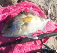 Perth fishing