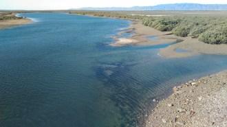 Fishy terrain