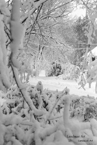 Snow Photo