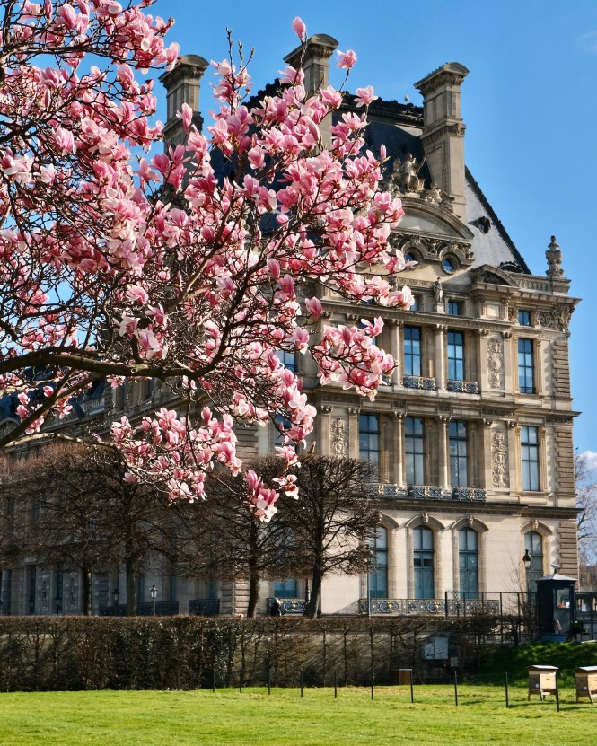Paris in Bloom Where to See Early Spring Flowers