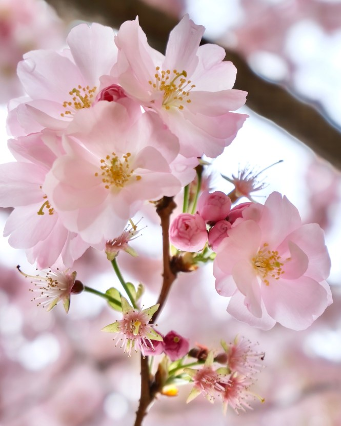 Five Friday Finds from France Petit Palais Cherry Blossoms