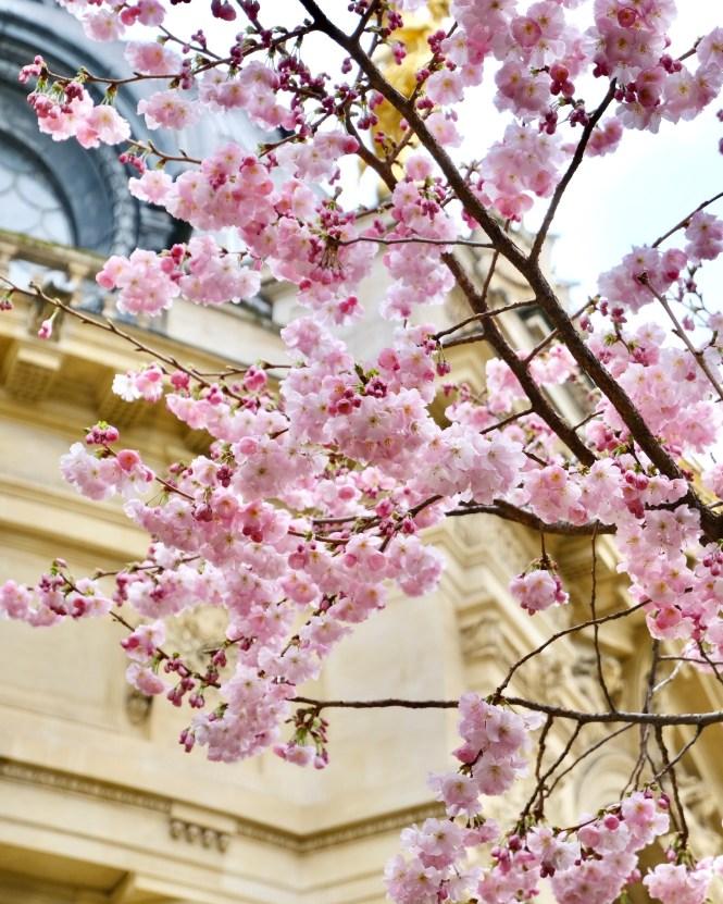 Petit Palais Cherry Blossoms