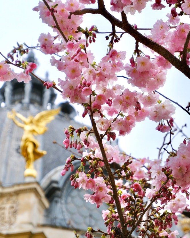 Traveling Alone in Paris Petit Palais Cherry Blossoms