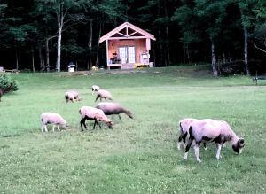 Bethel Pastures