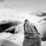365 Project 007 / 7 Oct 2014 / loose seal #2