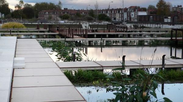 20-water-garden-phytoremediation