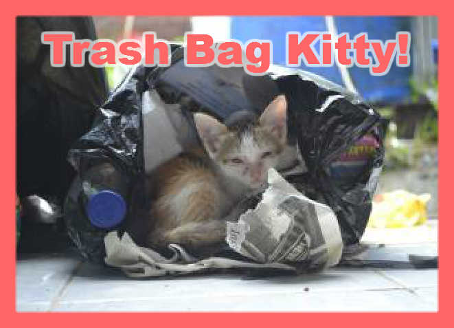 Image is a photo of trash bags kitty