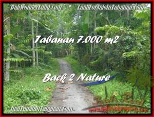 FOR SALE Magnificent LAND IN Tabanan Penebel BALI TJTB176