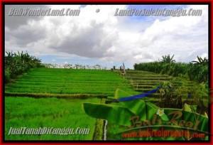 Beautiful CANGGU 290 m2 LAND FOR SALE TJCG141