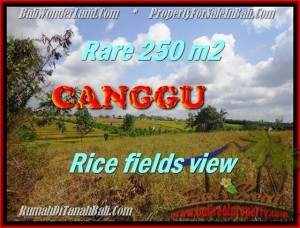 Exotic PROPERTY 250 m2 LAND FOR SALE IN CANGGU BALI TJCG164