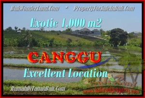 Affordable 1.000 m2 LAND FOR SALE IN CANGGU TJCG168