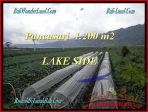 Affordable LAND SALE IN Tabanan Bedugul BALI TJTB178