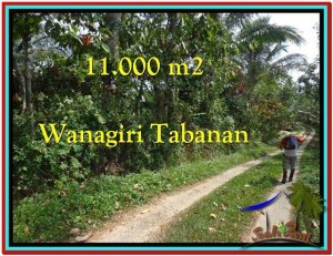 Exotic 11.000 m2 LAND FOR SALE IN TABANAN BALI TJTB213
