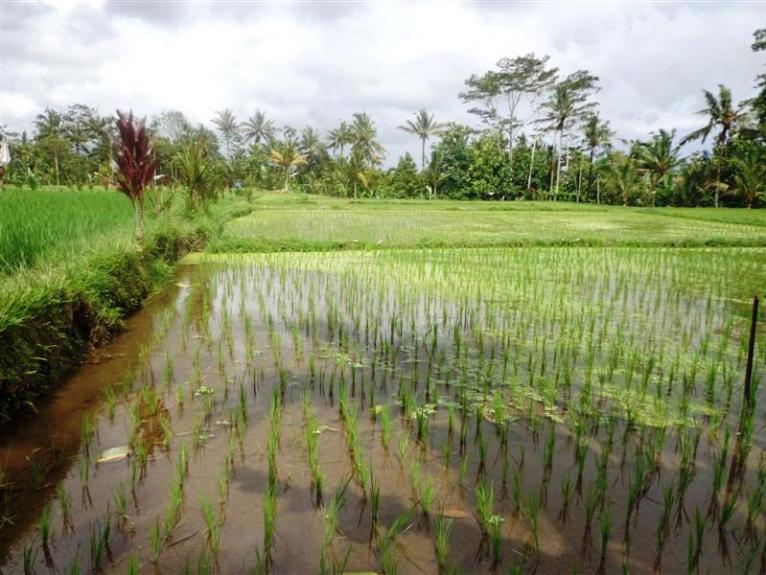 Land for sale in Ubud Bali by the river  – TJUB193