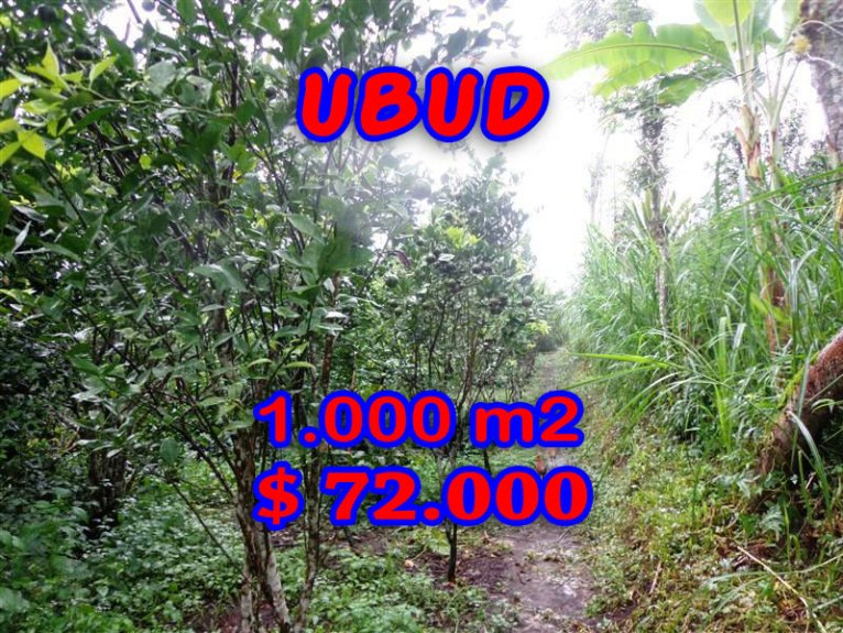 Affordable 1.000 sqm Land in Ubud Bali For sale