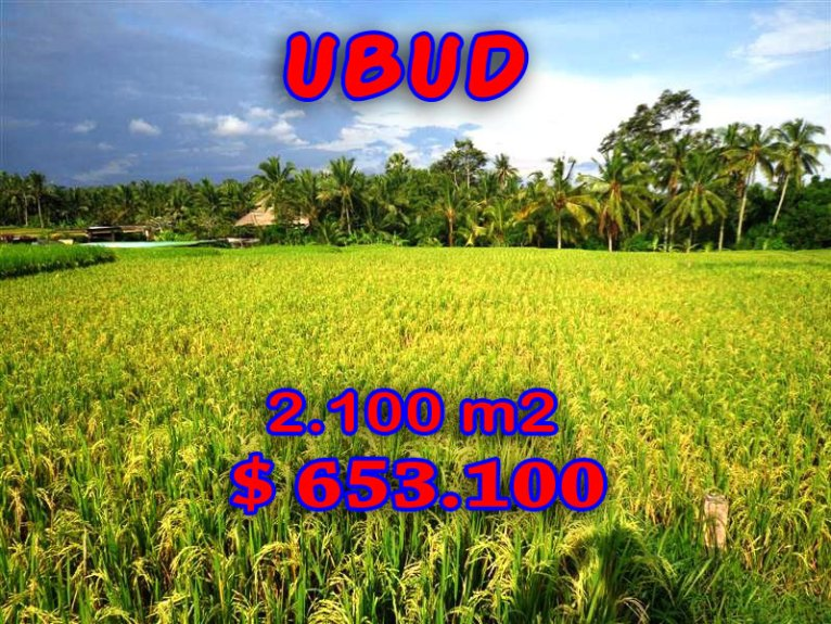 Land for sale in Bali 21 Ares   Close to Ubud Center