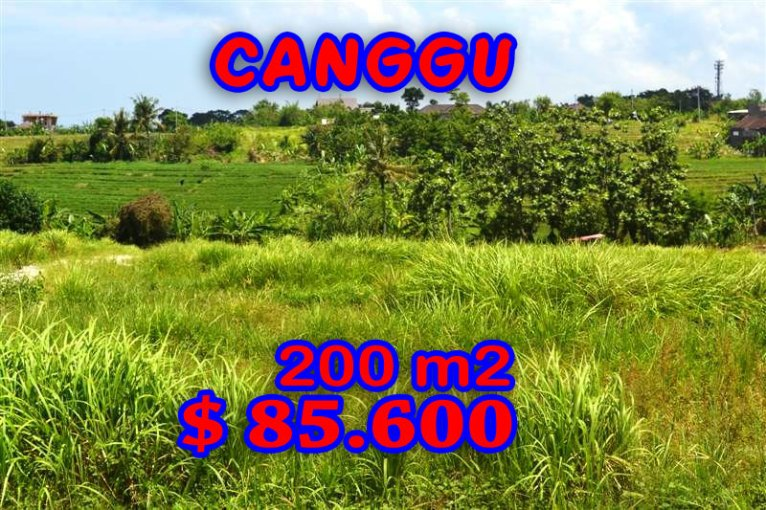 Amazing Property in Bali, Land for sale in Canggu Bali – TJCG099
