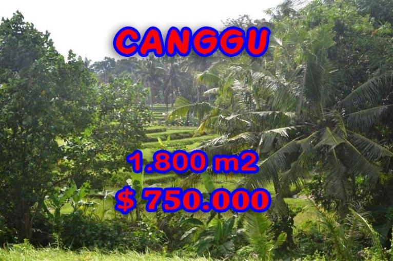 Astonishing Land for sale in Bali, Fantastic Paddy View in Canggu Berawa – TJCG111