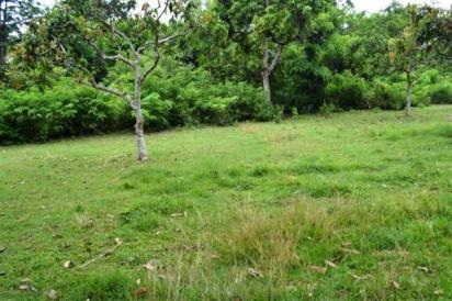 Property for sale in Jimbaran landProperty for sale in Jimbaran land