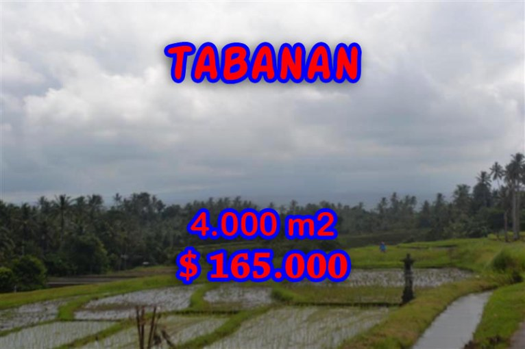 Magnificent Land for sale in Bali, rice fields and mountain view in Tabanan Bali – TJTB054