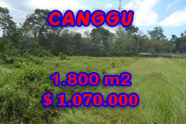 Fantastic Land for sale in Bali, rice fields view in Canggu Batu Bolong– TJCG119