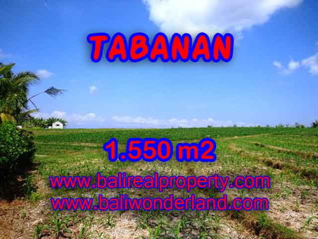 Beautiful Land for sale in Bali, Rice fields and mountain view in Tabanan Bali – TJTB134
