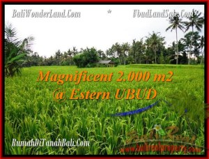 FOR SALE Exotic 2,000 m2 LAND IN UBUD TJUB485