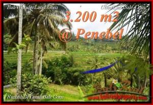 Exotic LAND SALE IN Tabanan Jatiluwih BALI TJTB216