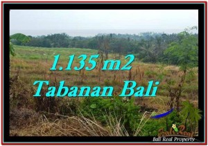 Beautiful LAND FOR SALE IN TABANAN TJTB253
