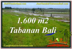 Beautiful 1,600 m2 LAND SALE IN Tabanan Selemadeg TJTB310