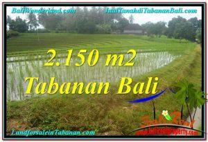 2,150 m2 LAND IN Tabanan Selemadeg BALI FOR SALE TJTB312