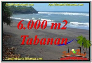 Affordable 6,000 m2 LAND FOR SALE IN Tabanan Selemadeg TJTB345