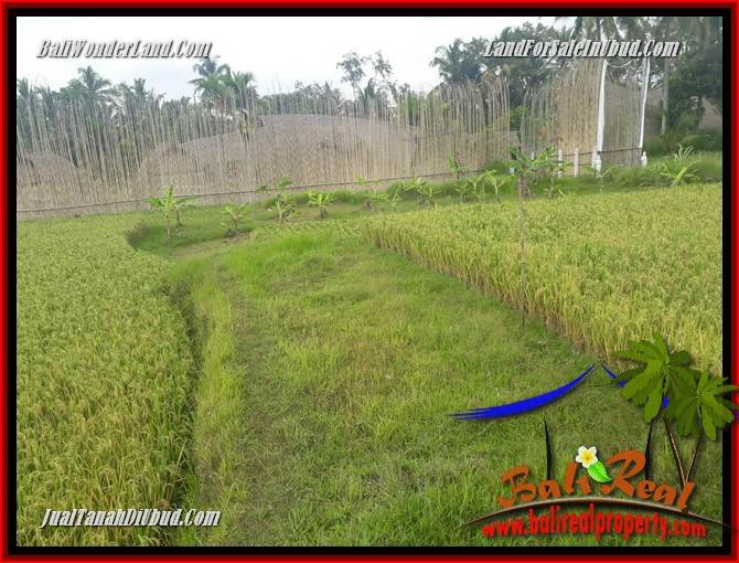 FOR sale Affordable 445 m2 Land in Ubud Bali TJUB695