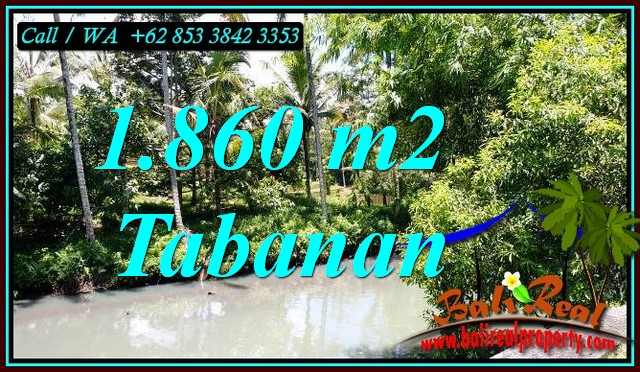 FOR SALE Affordable PROPERTY 1,860 m2 LAND IN SELEMADEG BALI TJTB467