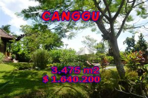 Land for sale in Canggu 34.75 Ares in Canggu