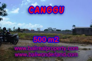 Property for sale in Canggu Bali, Interesting land for sale in Batu Bolong  – 500 sqm @ $ 850