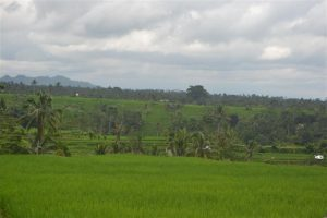Land in Tabanan for sale 4,000 m2 Stunning montain and rice paddy view